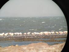 Man sieht Flamingos, die im See Mar Chiquita stehen mit Fernrohrblick