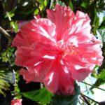 Pflanzen im Hochland Guatemalas