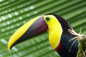 Naturreise in Costa Rica