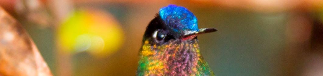 Costa Rica Reise Kolibri