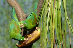 Ornithologie Costa Rica