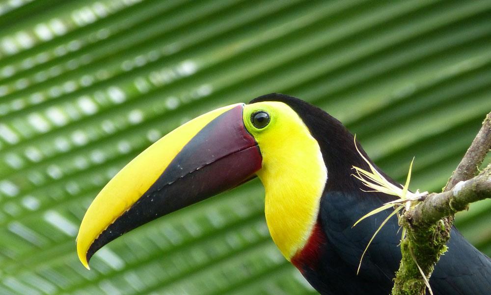 Kolumbien Costa Rica