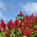Flora Insel Solentiname