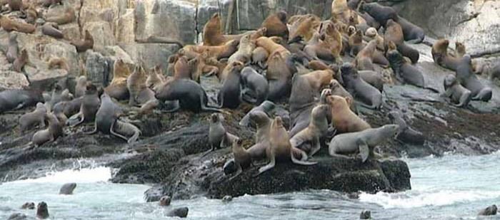 Insel Palomino mit Seelöwen
