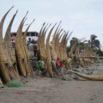Taroa Schildboote in Huanchaco