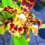 Flora in Ecuador