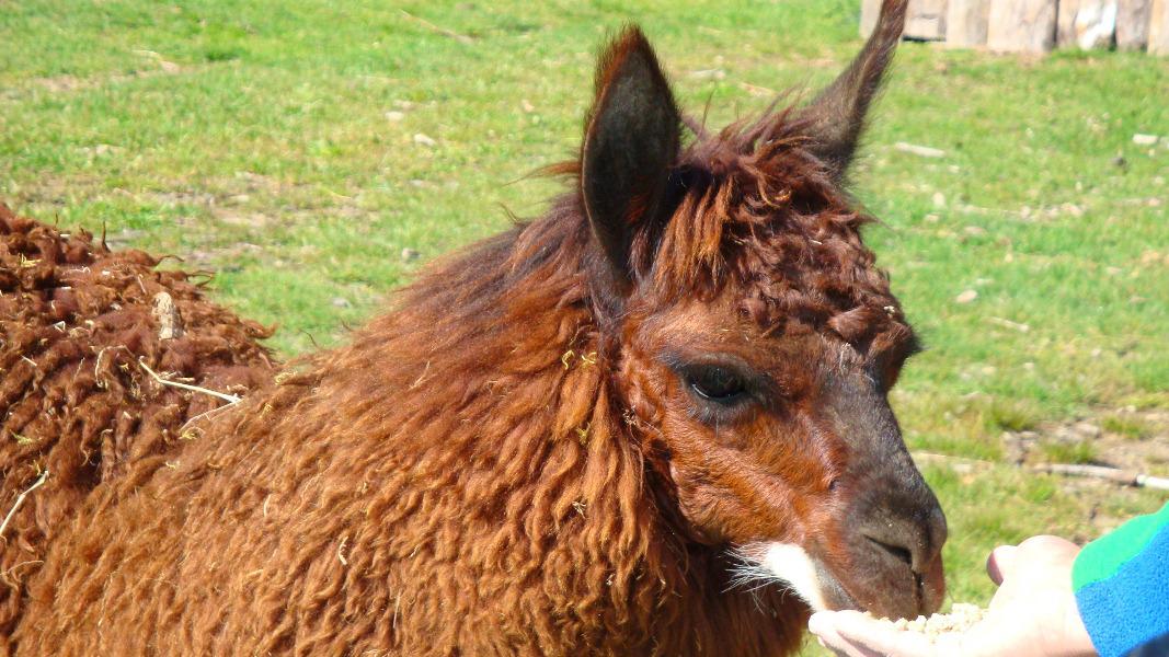 Patagonien Reise mit Lamas