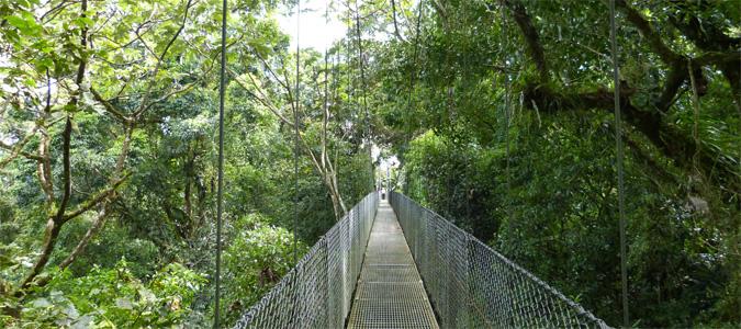 Eine Hängebrücke, die durch das Dickicht des Urwalds am Vulkan Arenal führt