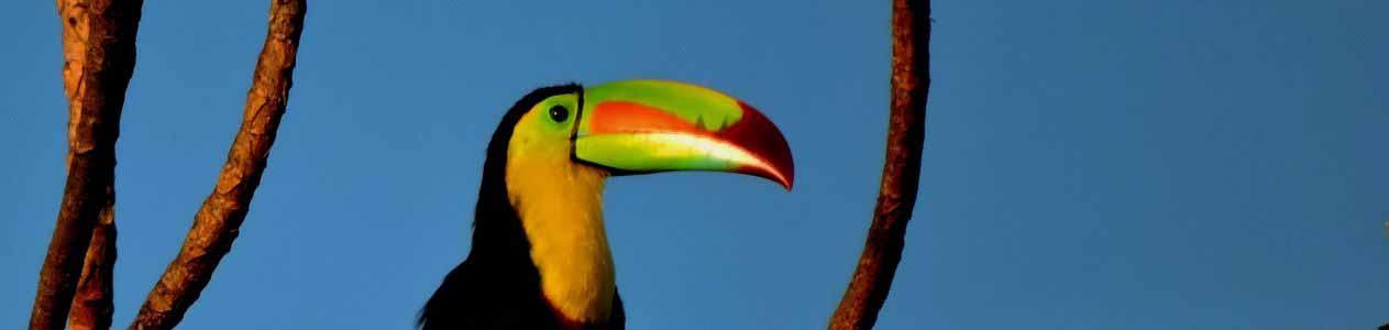 Vogelbeobachtung im Amazonas Regenwald in Kolumbien