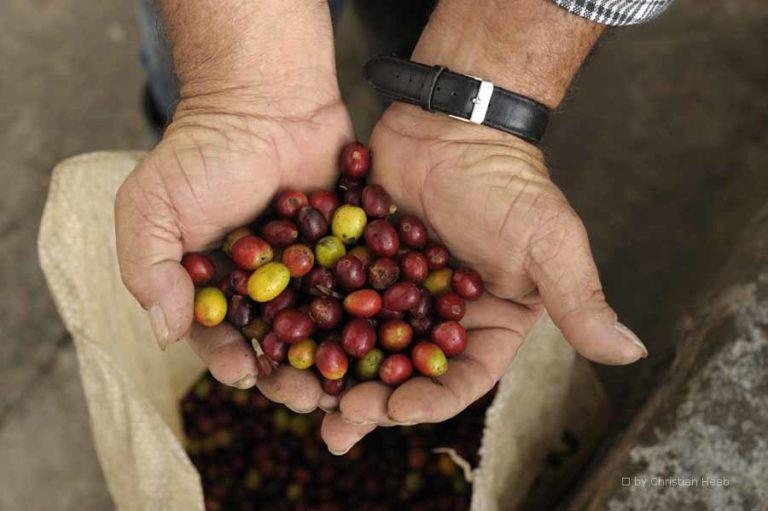 Kaffeeregion von Kolumbien