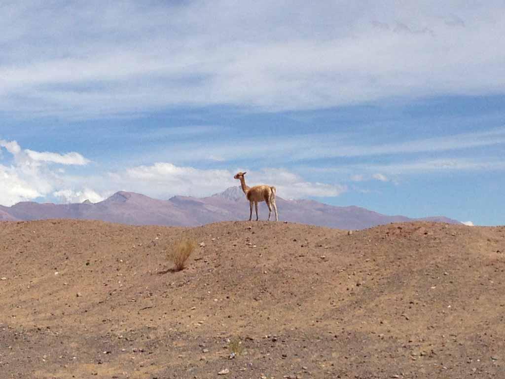 Nationalparks Nordargentinien
