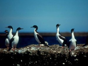 Pinguine Punta Tombo