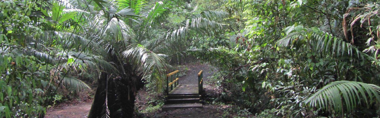Panama Wanderreise entlang der Plantation Road