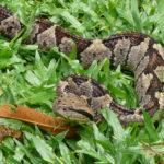 in Los Llanos können Sie Schlangen finden