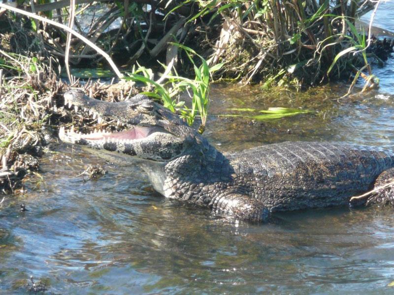 Tierbeobachtungen im Bigi Pan Naturreservat