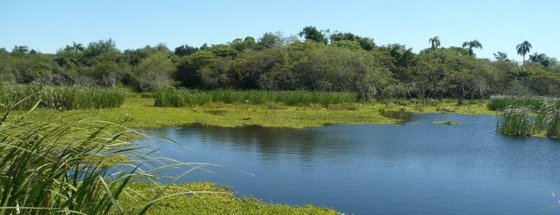 Sumpfgebiet Esteros de Ibera in Argentinien
