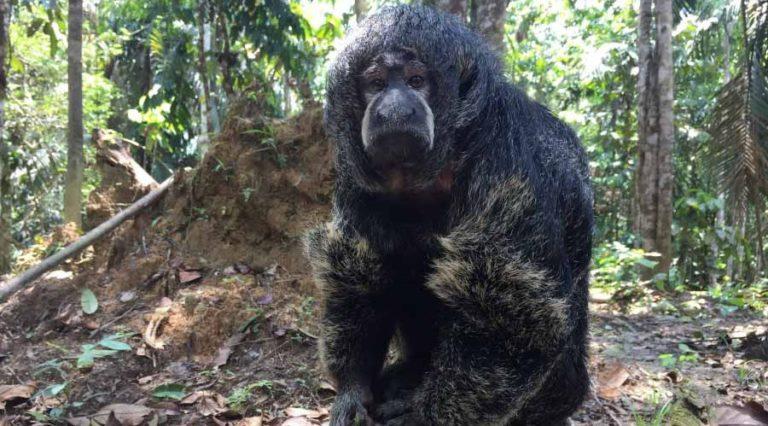 Kolumbien mit vielfältiger Fauna