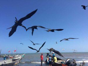Küste bei Chitre mit Rückkehr der Fischboote