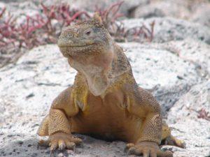 Ecuador Galapagos Reise