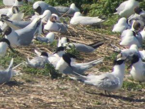 Vögel in den Niederlanden
