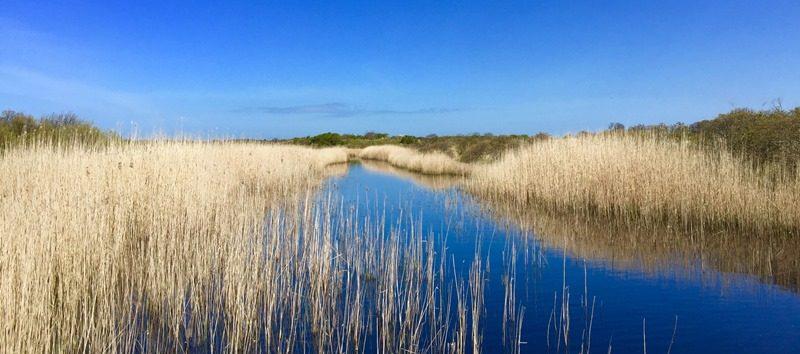Herrliche Natur im Lauwersmeer in den Niederlanden