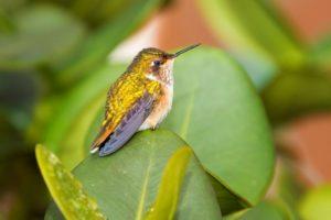 Ornithologische Reise durch Ecuador mit vielen Kolibris