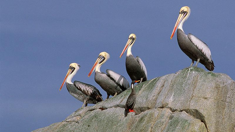Vogelbeobachtungen in Chile