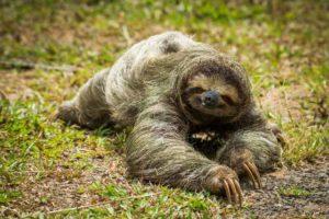 Costa Rica kennenlernen und ein Faultier entdecken mit napur tours