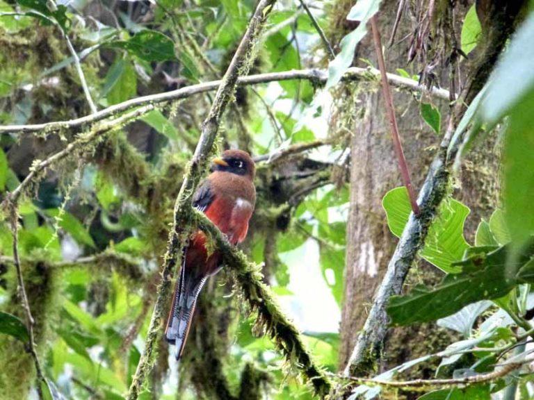 Vogelbeobachtungen bei der Santa Lucia Lodge