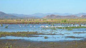 Vogelbeobachtung Palo Verde