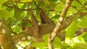 Tierbeobachtungen an der Karibikküste