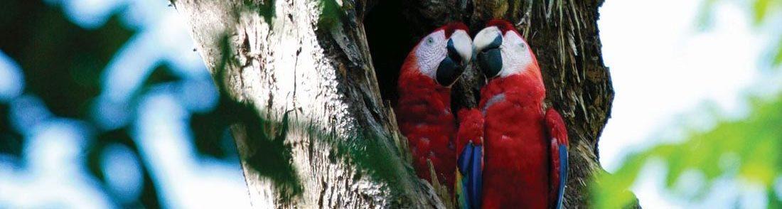 Costa Rica selbst entdecken mit dem Mietwagen