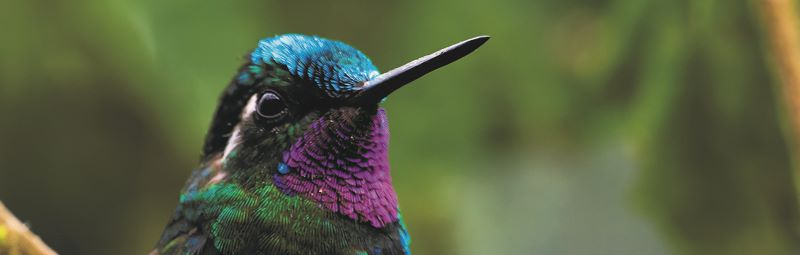 Birdingcontest Costa Rica