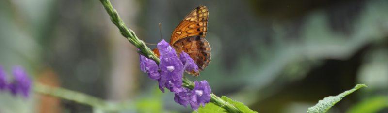 Auf einer Mietwagenreise durch Panama die Flora und Fauna entdecken