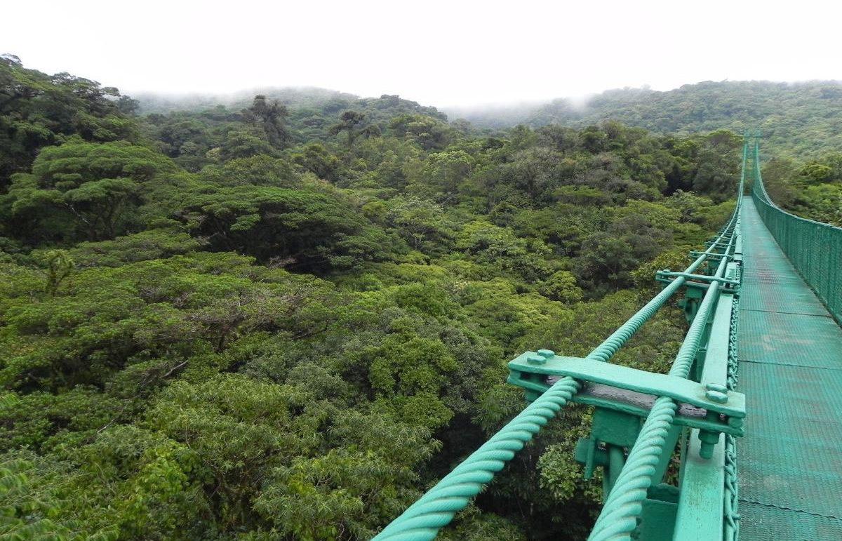 Monteverde Selvatura Hängebrücken Wanderung