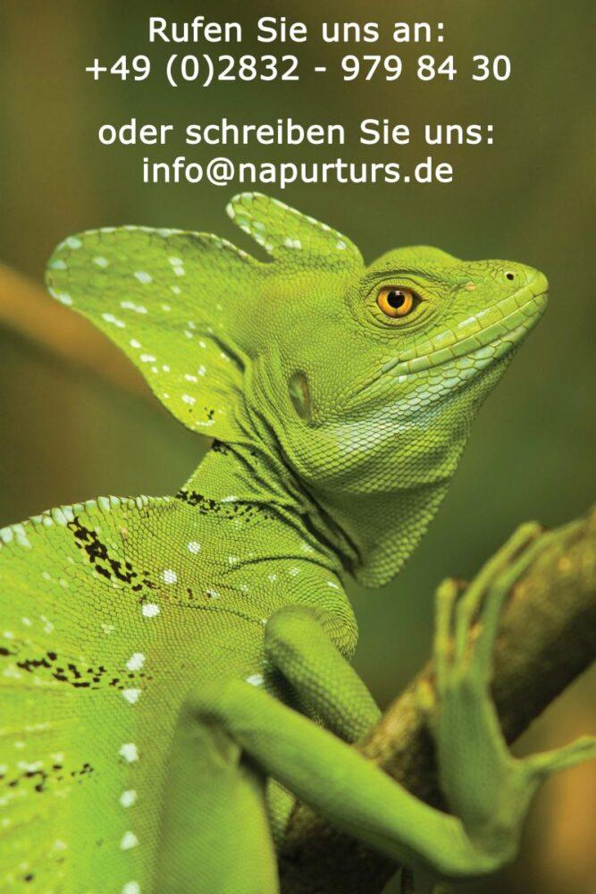 Costa Rica Naturreisen mit Tierbeobachtungen