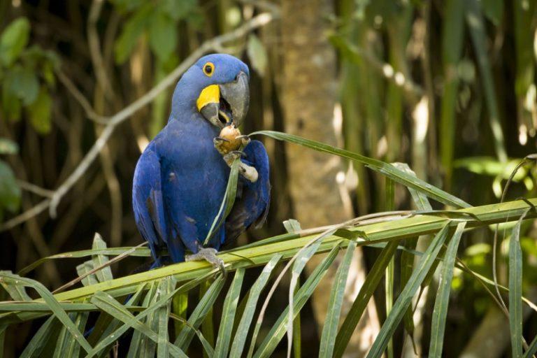 birdwatching Pantanal