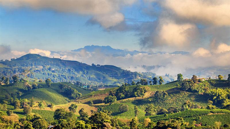 Blick über die verwunschene Landschaft der Kaffeezone Zona Cafetera in Kolumbien. Grüne Hügel auf den vereinzelt Bäume stehen, blauer Himmel, der nur von ein paar wenigen dunklen Wolken bedeckt ist.